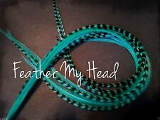 "Feather Extension For Hair,  Whiting Eurohackle, Aqua, Super Long 11""- 14"""