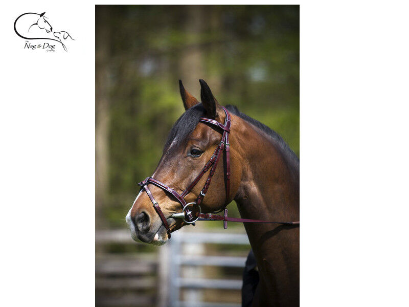 Optimum Comfort Padded Bridle Flash Nose With Reins Cognac Havana  FREE DELIVERY