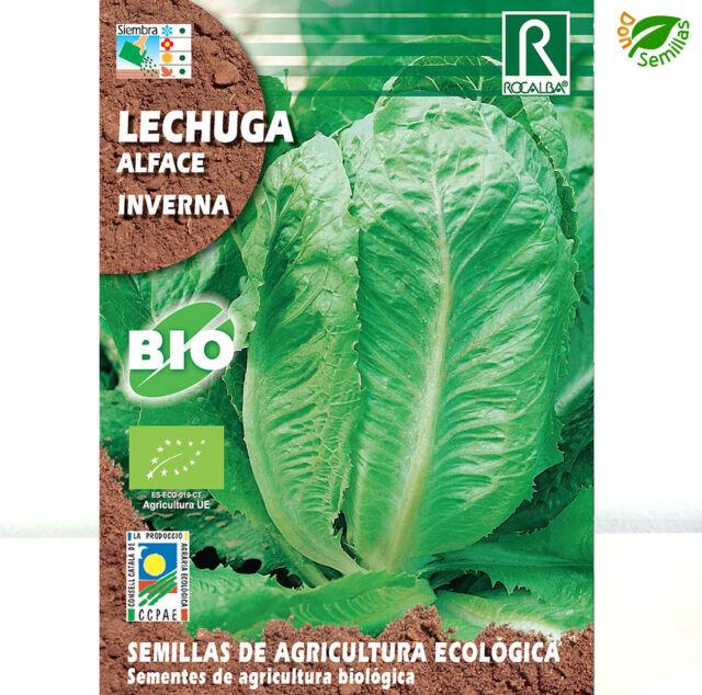 Lechuga Inverna Ecológica ( 2 gr / 1.400 semillas) seeds Eco Ecologica
