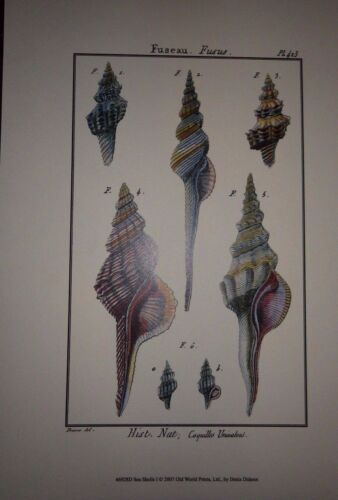 Denis Diderot Sea Shell Shells Art Print Posters Beautiful Frame It H Stock 2