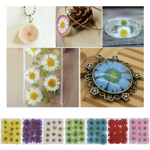 Pressed Flower Resin Crafts DIY Art Jewelry Making ~ 12pcs Dried Daisy Flowers