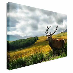 Scottish-Stag-on-Highlands-Canvas-Wall-Art-Picture-Print
