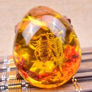 1Pc-Fashion-Insect-Stone-Scorpions-Inclusion-Amber-Baltic-Pendant-Necklace-InV