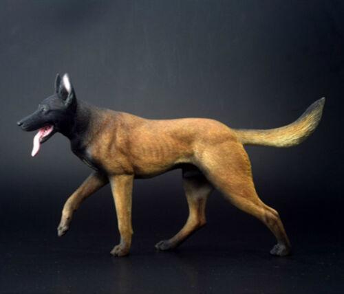 1//6 lavoro cane belga Malinois Figura Animale da Compagnia modello colllector Decor Toys