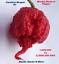 Seeds 2019 Harvest COMBO PACK 2 KINGS Carolina Reaper HB22a Ghost Pepper 100