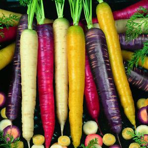 """(254) """"rois De La Qualité Carotte Mix Voiture 500 Graines-jardin Légumes-afficher Le Titre D'origine Avec Une RéPutation De Longue Date"""
