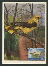 SAN MARINO MK 1960 VÖGEL PIROL BIRDS MAXIMUMKARTE CARTE MAXIMUM CARD MC CM d5726