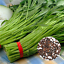400Pcs-Bag-Vegetable-Garden-Seeds-Water-KANG-Plant-Leaf-Green-SPINACH-Seeds-Q3Y3 thumbnail 1