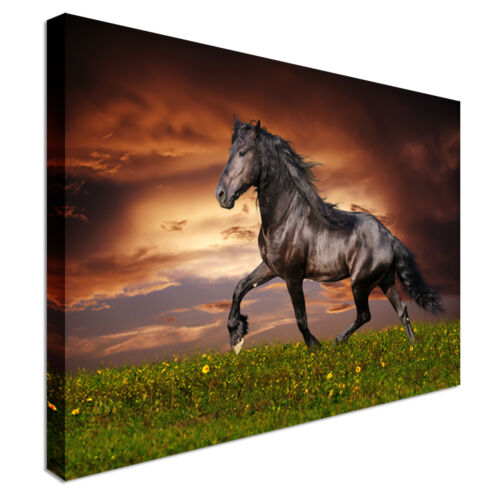 Black Friesian horse Canvas Prints Great Value Affordable Wall Art