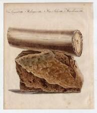 Archäologie-Mammutzahn-Elefant-Stoßzahn - Bertuch-Kupferstich 1800