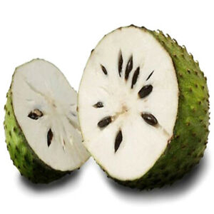 20-Stuecke-Samen-soursop-Durian-tropische-Fruchtgarten-BonsDDE