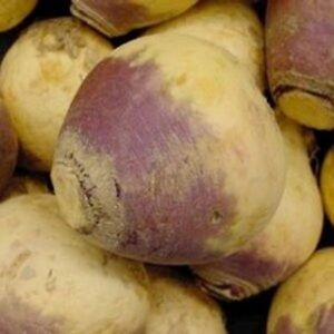 Rutabaga-Purple-Top-200-Seeds-BOGO-50-off-SALE
