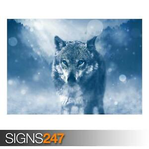 WOLF-WINTER-AD979-NATURE-POSTER-Photo-Picture-Poster-Print-Art-A0-to-A4