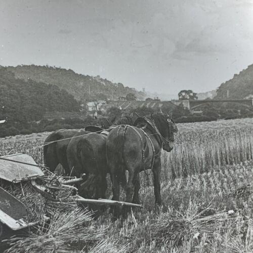 Vtg Magic Lantern Glass Slide Photo Keystone Harvesting Wheat In England Horse