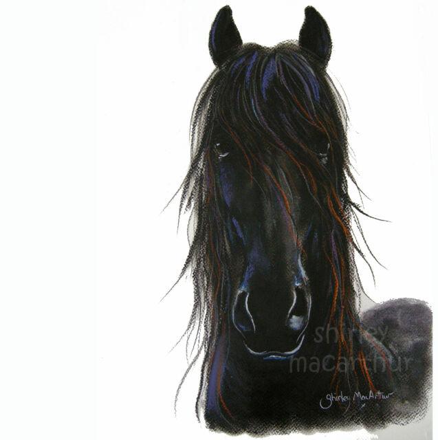 SHIRLEY MACARTHUR BOX CANVAS PRINT IN 3 SIZES BLACK FRIESIAN HORSE' BLACK VELVET