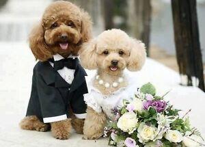 Vestito Da Sposo O Da Sposa Per Cani E Gatti Ebay