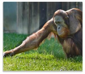 Herdabdeckplatte Sitzender Orang-Utan im Gras