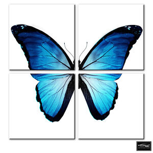 Image Is Loading Animals Morpho Butterfly Blue BOX FRAMED CANVAS ART
