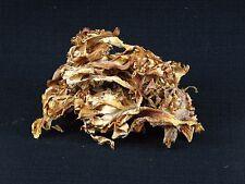 Wild Harvested Dried Cauliflower Mushroom - 1 oz. 2016 Season Oregon