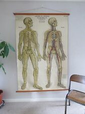 RARE VINTAGE ROLL DOWN MEDICAL SCHOOL FROHSE ANATOMY CHART CIRCULATION & NERVES
