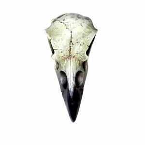 Alchemy-Gothic-Reliquary-Raven-Talisman-Resin-Skull-Ornament-Neck-Charm