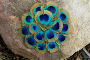 Round - Cut out Peacock Eye Feather Pad     US Seller