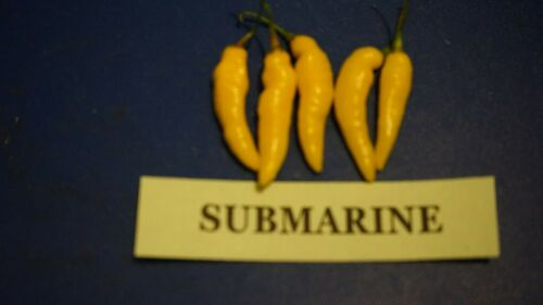 10 Submarine Chilli Seeds