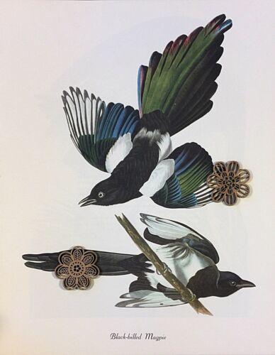 "Vtg Audubon Bird Art Print POSTER Color Litho COLORFUL BLUE RED YELLOW 12/"" x 15/"""