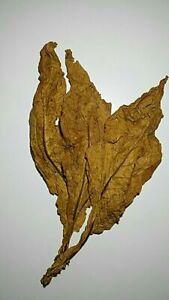 Feuilles-de-Tabac-Virginie-Orange