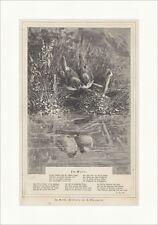 Im Walde H. Giacomelli Vögel Tiere Teich Seidl Spiegelbild Holzstich E 17471