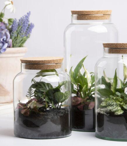 Diquer terrarium flacon verre 5 L plantes deco singe maison fleurs Liège Maison