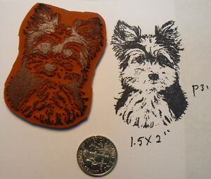 P31-Yorkshire-terrier-puppy-rubber-stamp-UM-1-5x2-034