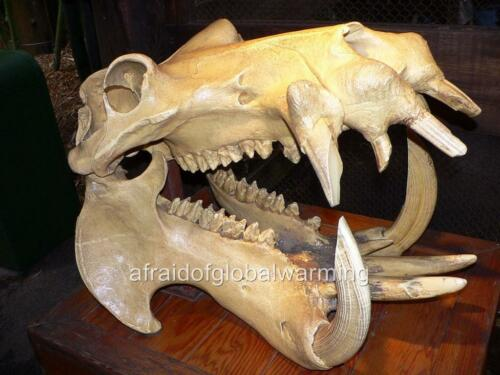 Photo Hippo Skull 2000s