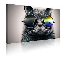 """20"""" X 30"""" fresco de impresión de fotos de lona Gato en Gafas Pared Arte Libre P&P"""