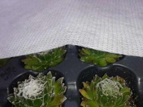 Schutzvlies Beet Vlies Frühbeet Gartenvlies 34g//m² 0,50€//m² Frühbeetvlies