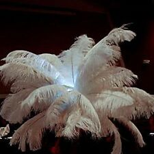 100 pcs lot of  long lady amherst wing white ostrich feathers plumes 15-20cm