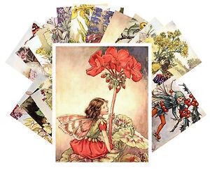 Postcards-Pack-24-cards-Flower-Fairy-Vintage-Book-Cecile-Barker-Pixies-CC1007