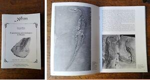 PINNA-G-TERUZZI-G-Il-giacimento-paleontologico-di-Besano-1991
