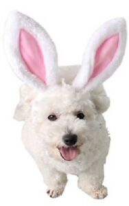 Pet Dog Cat Easter Bunny Rabbit