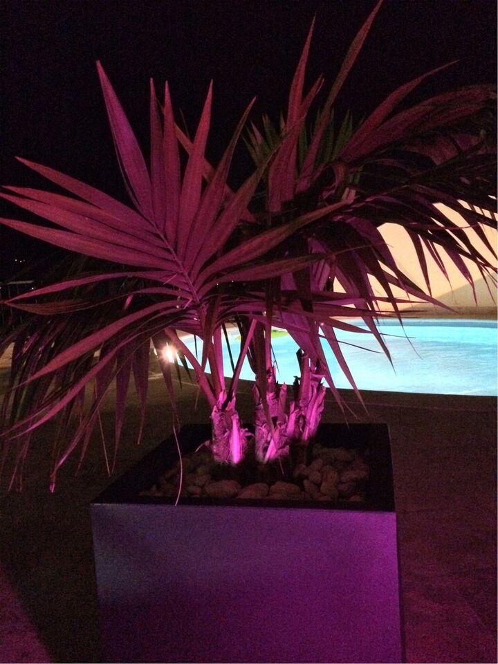 LED, LED pærer med mange farver