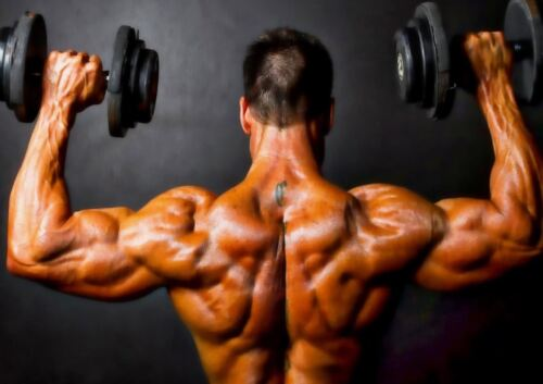 BODYBUILDING WEIGHT LIFTING GYM MUSCLES A3 ART PRINT POSTER YF5089