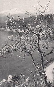 D2254-L-039-Etna-vista-da-Taormina-Stampa-d-039-epoca-1923-vintage-print