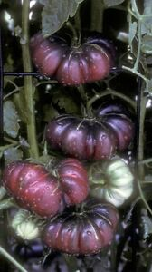 10 Tomato Seeds DELTA DIVER RED Heirloom Vegetable Organic-Bi-Color Striped-Rare