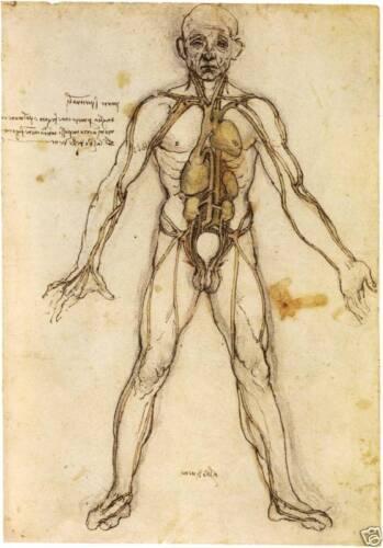 Fine Art Prints 6 Anatomy Drawings Da Vinci Art