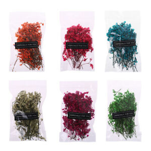 1-Bag-Real-Pressed-Dried-Flowers-Leaves-For-DIY-Epoxy-Resin-Jewelry-Making-Craft