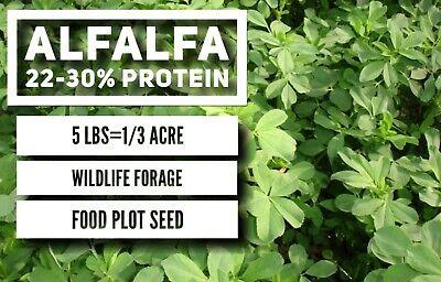 FREE SHIPPING 1 Lb Rape Seed Deer Food Plot Wildlife Seed Deer Food