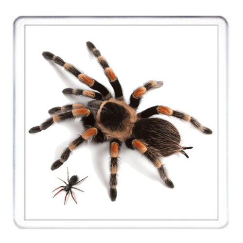 peut être Personnalisé Halloween Horror Cadeau Coaster Tarantula Design Coaster
