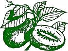 fruittreenurseryaustralia