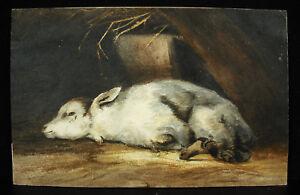 Dessin Original Vers 1900 Agneau Couché Lying Lamb Animal Aquarelle 19 Cm Draw