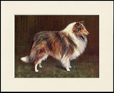 ROUGH COLLIE LOVELY NAMED CHAMPION DOG PRINT MOUNTED READY TO FRAME